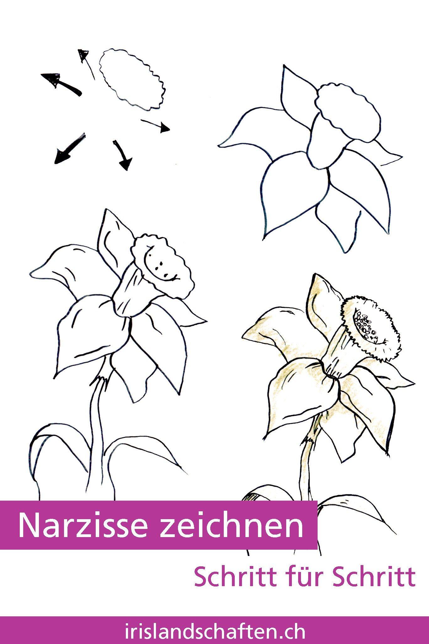 Pflanzen Zeichnen Schritt Fur Schritt Irislandschaften Ch Zeichnen Schritt Fur Schritt Blumen Zeichnen Zeichnen Leicht