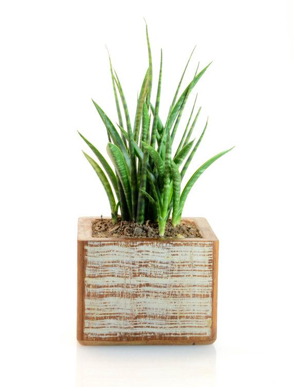 Bamboo Planters Bamboo Planter Wood Planters Backyard Landscaping