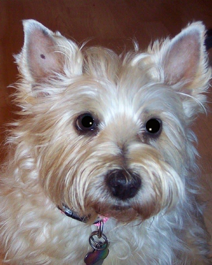 Col Potter Cairn Rescue Network Post Adoption Blog Lucy 101 A