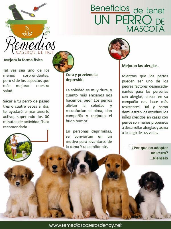 Conoce El Por Qué Tener Un Perro De Mascota Trae Beneficios Para Tu Salud Mascotas Animales Y Mascotas Perros Mascotas
