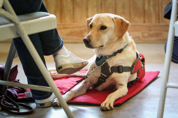 Can Diabetes Alert Dogs Help Sniff Out Low Blood Sugar Diabetic