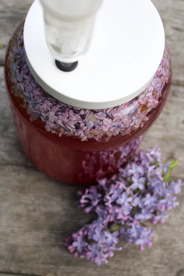 Homemade Lilac Wine Practical Self Reliance Recipe In 2020 Lilac Edible Flowers Recipes Wine Recipes