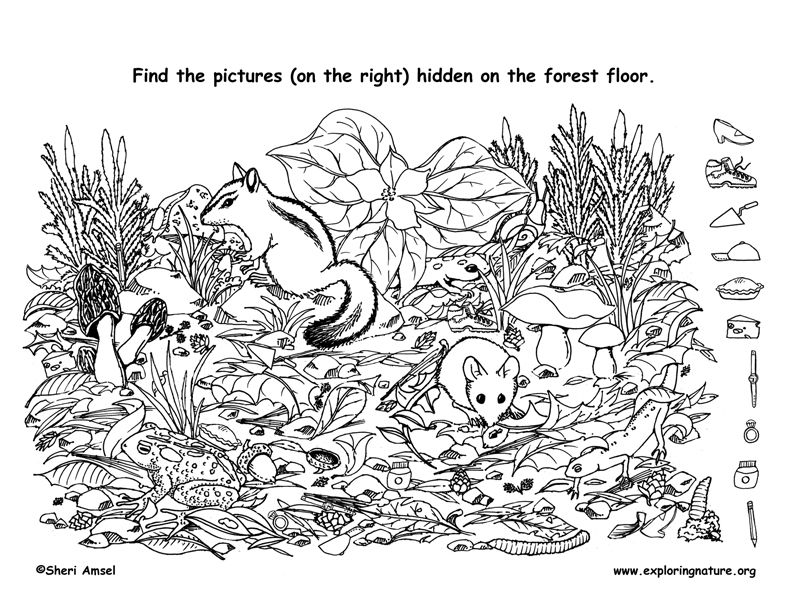 Hidden Animals Coloring Pages : Find the hidden things on forest floor and then color