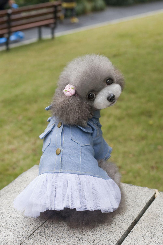 275e9285e Cheap Primavera perro de mascota otoño falda de mezclilla ropa de ocio  Solid Jean blanco del