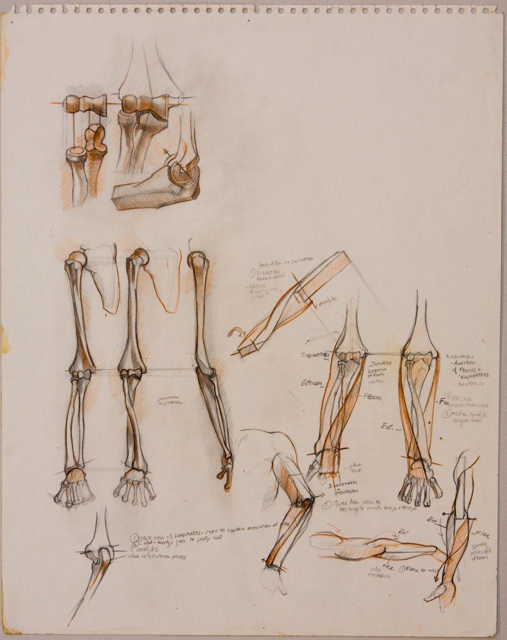 Welcome Artists Pinterest Anatomy Human Anatomy And Figure