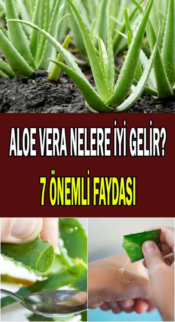 Aloe Vera Nelere İyi Gelir? | Алоэ, Здоровые напитки, Здоровье