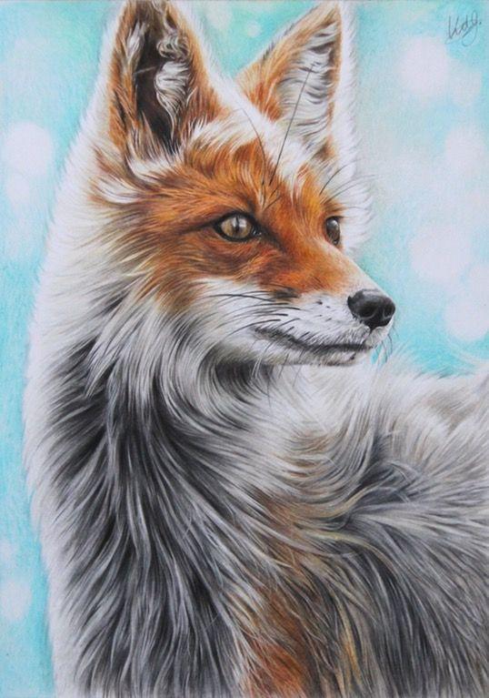 Fox Polychromos Colour Pencils A4 Art Jesushedgehog On
