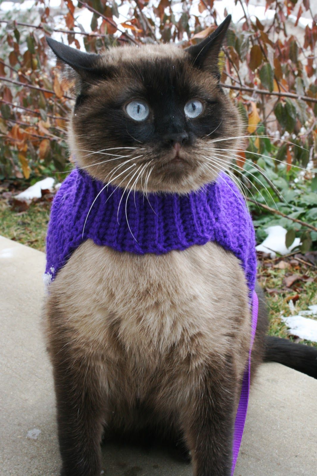 Cat Sweater Pattern Amazing Decoration