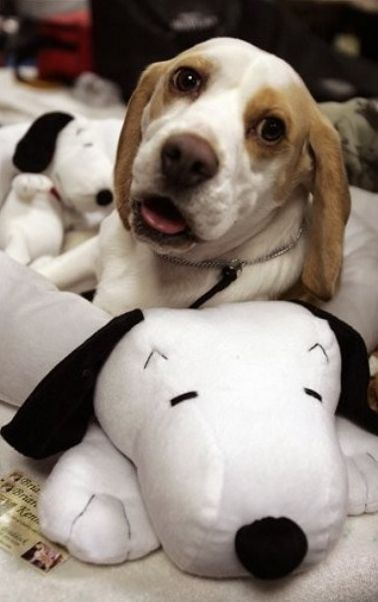 Snoopy S My Main Man Dogs Pets Beagles Facebook Com