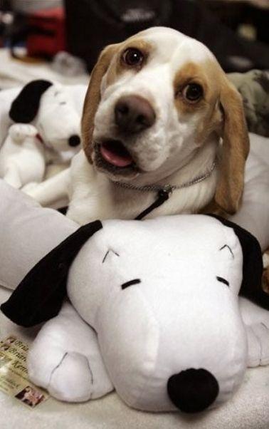 Beagle = Snoopy. Snoopy = Beagle.