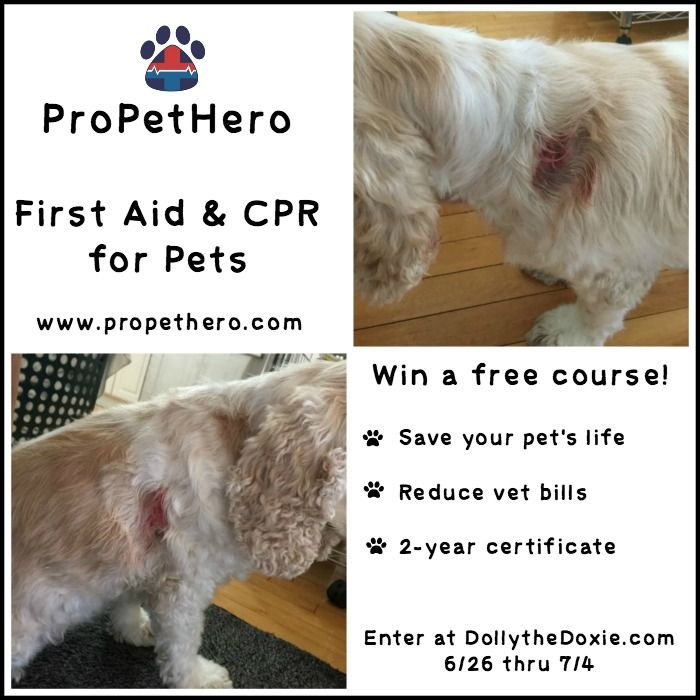 Learn Pet First Aid And Cpr Online From Propethero Save Your Pet S Life Reduce Vet Bills And Receive A Two Dog Food Online Pets Dog Boarding Near Me
