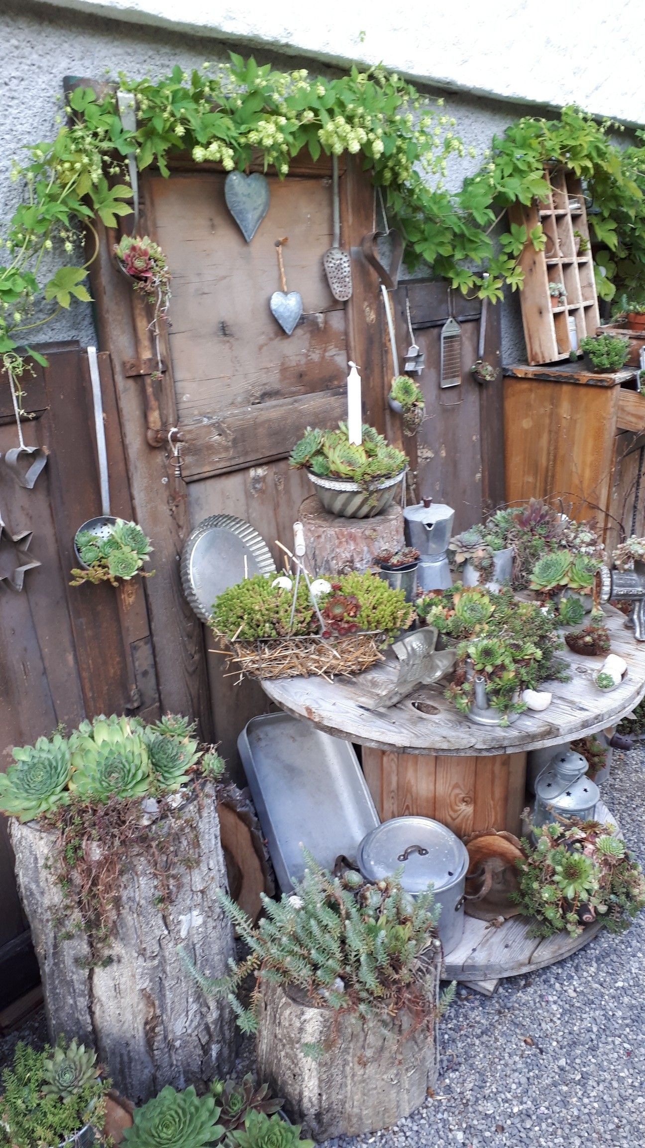 Der Hopfen Ist Ein Zeichen Dass Der Herbst Schon Bald Vor Der Tur Steht Mitte August 2019 In 2020 Blumen Fur Garten Gartendekor Garten Deko