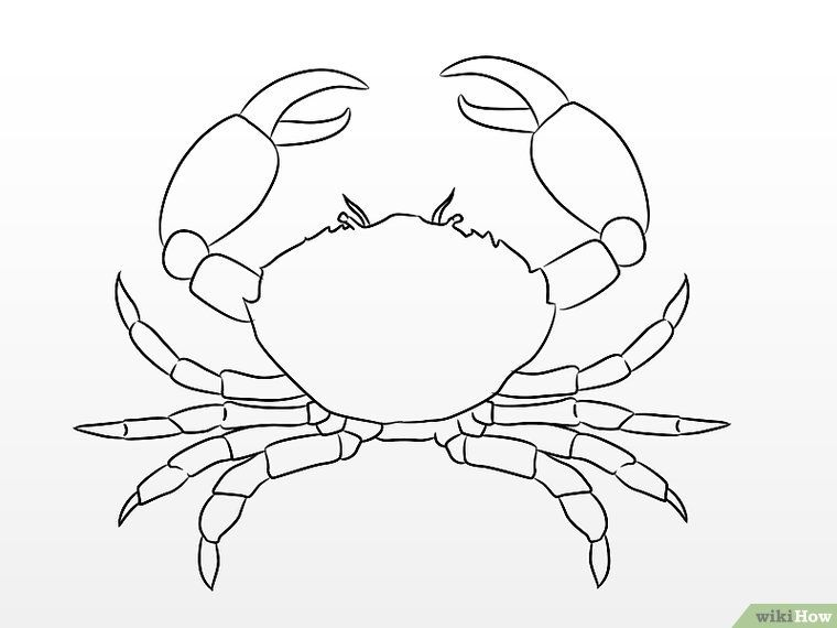 How To Draw A Crab 10 Steps With Pictures Crab Art Sea Creatures Drawing Crab Painting