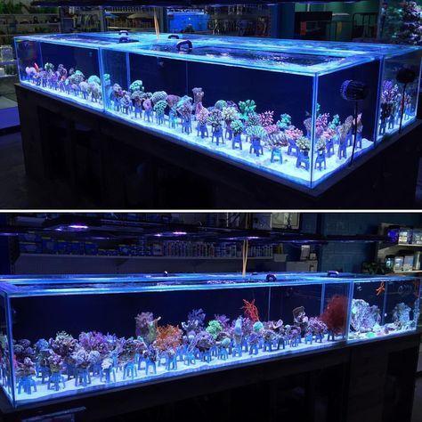 A L I V E ☼ | Saltwater fish tanks, Saltwater aquarium ...