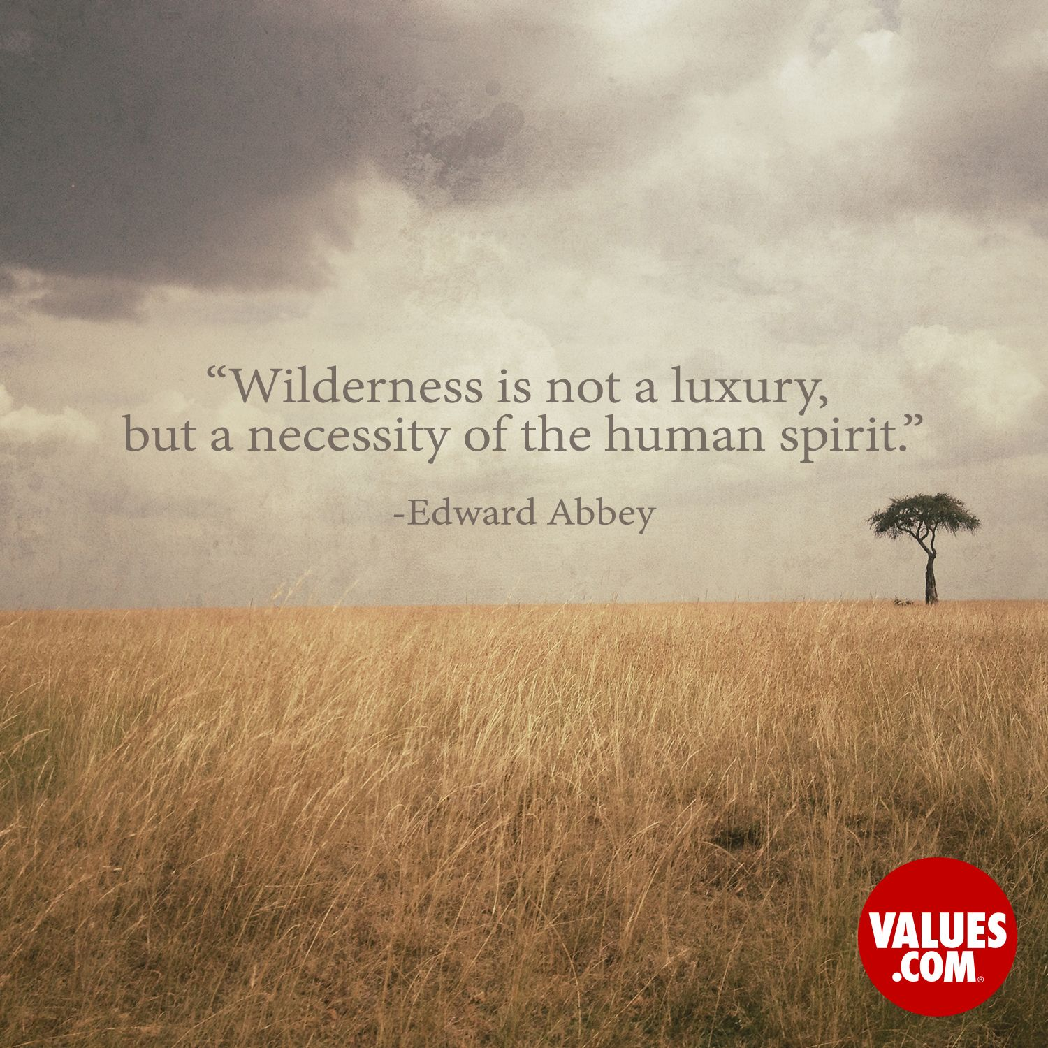 Quotes About Appreciating Life An Inspirational Quoteedward Abbey From Values  Words