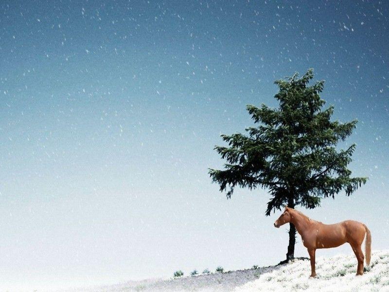 Les Fonds D Ecran Un Cheval En Liberte Dans La Neige Cheval Photos De Chevaux Images