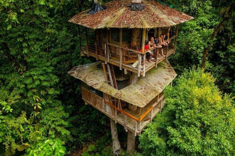 Una casa del árbol que es hotel y santuario natural Casa del arbol - casas en arboles