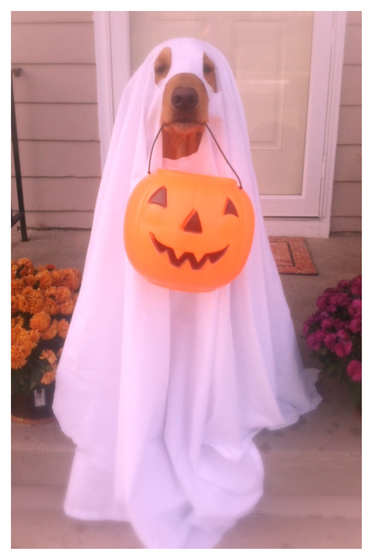 Easy Ghost Dog Costume White Sheet And A Plastic Trick Or Treat