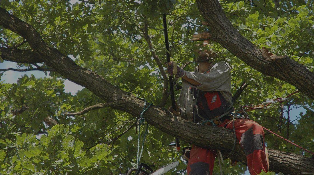 Park Art|My WordPress Blog_Emergency Tree Service Richmond Va