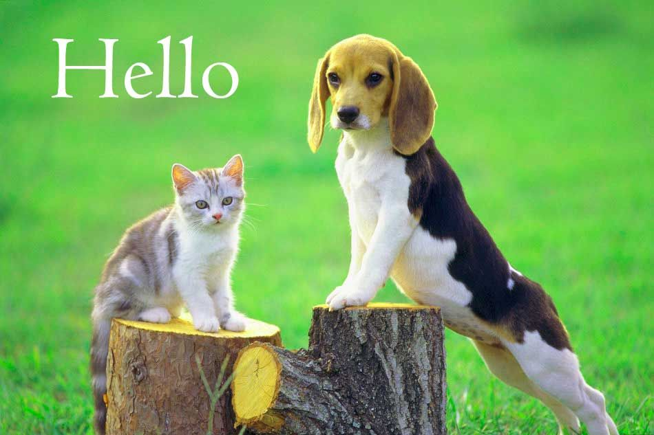 Hi Hello Images Photo Picture Wallpaper Download And Share Cute