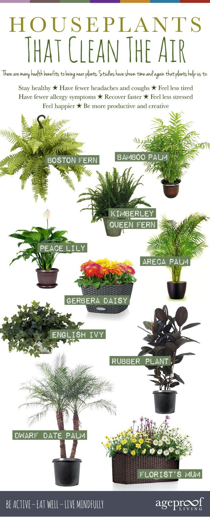 10 Best Houseplants That Clean The Air  We all know that fresh air is  vital for our good health, but what if you're stuck indoors most of the  time?