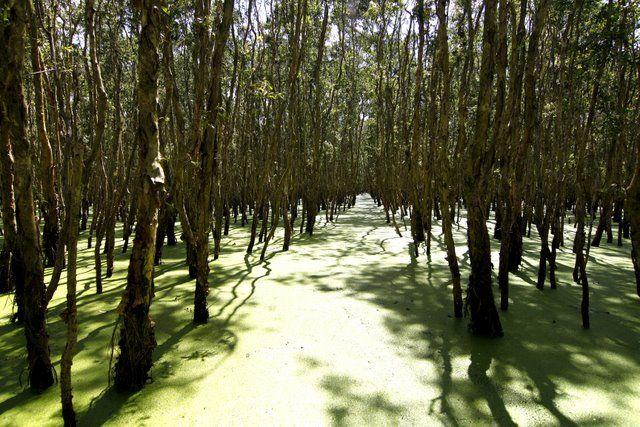Tra Su Forest - Vietnam