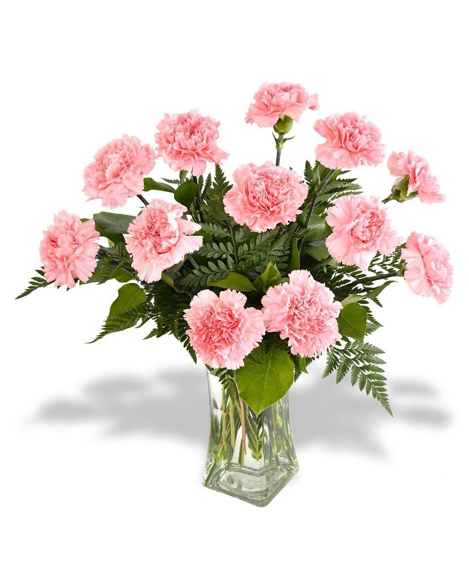 About Best St Louis Florist Walter Knoll Florist Saint Louis Mo Same Day Delivery Flower Shops St Louis Mi Flowers Online Carnations Order Flowers Online