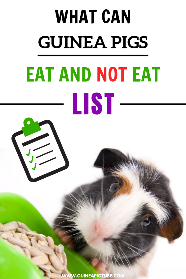 Pin On Guinea Pig Food And Diet