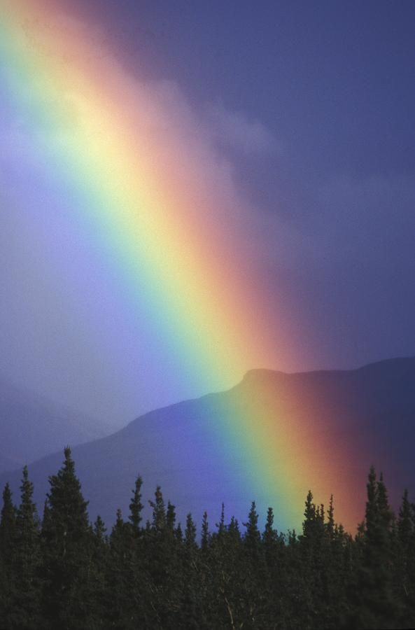 Rainbow Arching Through Clearing Skies Over Evergreen
