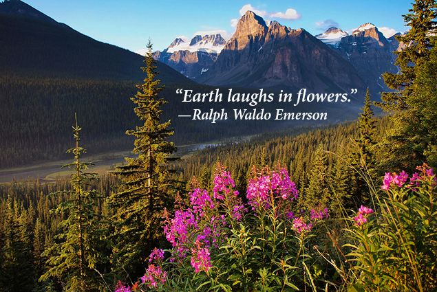 Famous Quotes That Will Inspire You To Spend More Time Among Nature Cottage Life Wildlife Quotes Nature Quotes Inspirational Instagram Captions