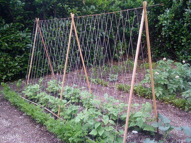 Superior Tomato Trellis Ideas Part - 5: DIY Tomato Trellis