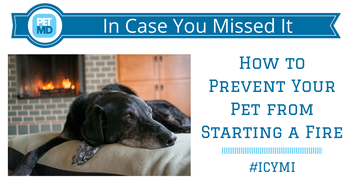 How To Prevent Your Pet From Starting A Fire Your Pet Prevention Pets