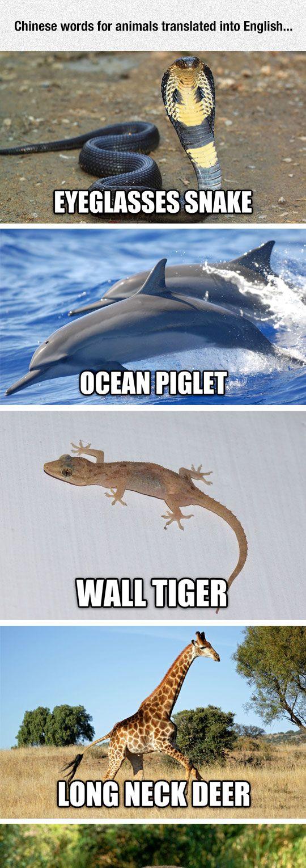 Chinese Animal Names Funny animal names, Funny animal