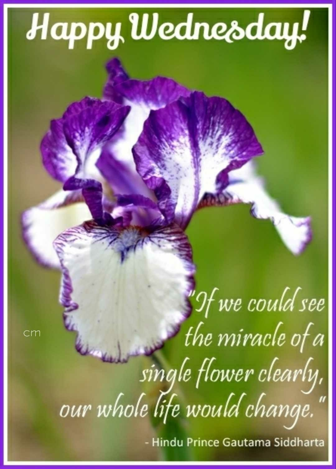 Happy Wednesday Flower quotes, Morning blessings, Good