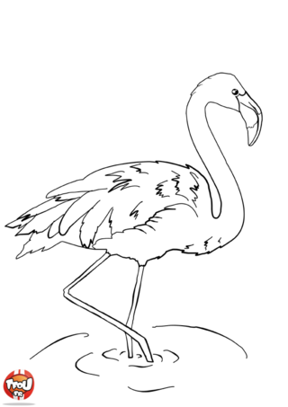 Coloriage flamant rose camargue van gogh juillet pinterest nature roses and animaux - Rose coloriage ...