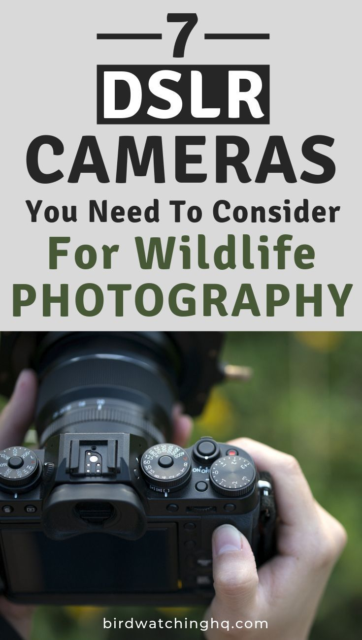 Want to grace the cover of National Geographic or become a professional wildlife photographer? There is no better place to start than purchasing an incredible DSLR digital camera for photographing animals, wildlife, birds, and nature. Cheap to expensive. Also includes tips, additional gear recommendations, lenses. Perfect article for beginner, amateur, or professional photographer. #cameras, #wildlife, #photography