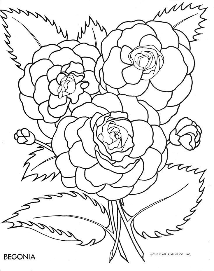 Flowers To Color Fritzi Brod Illustrator Platt And Munk 1951 Gallery Link File Columns 2 Size Medium Ids Flower Coloring Pages Coloring Pages Flower Drawing
