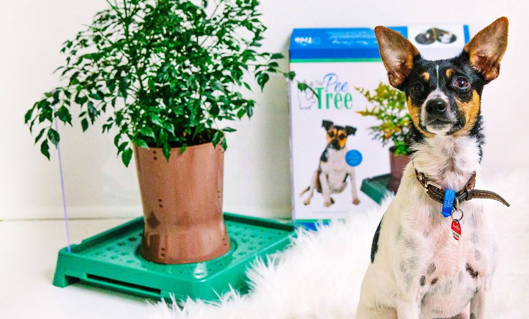 The Pee Tree Indoor Toilet For Dogs Australian Dog Lover