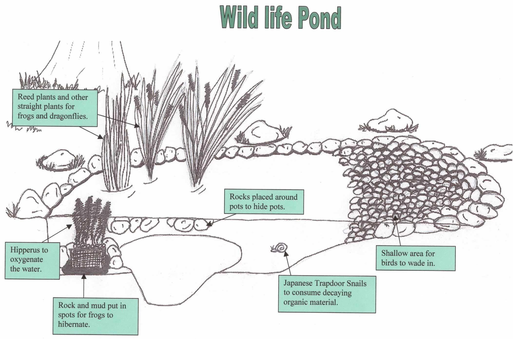 Plants set up wildlife pond ideas pinterest pond for Design criteria of pond