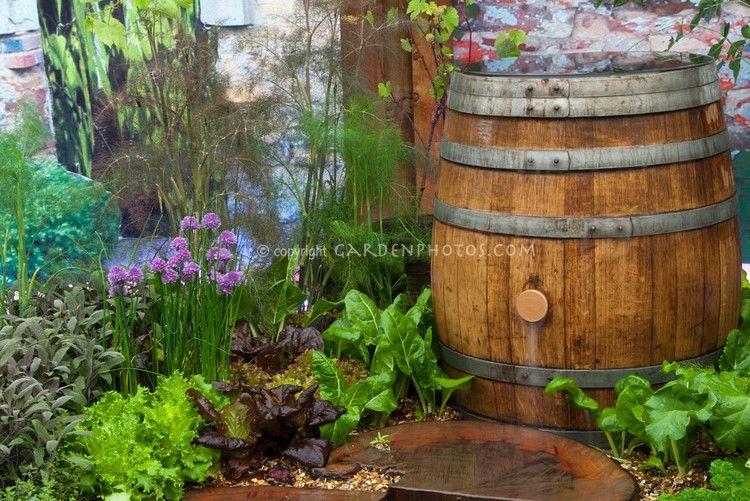 herbs, rain barrel
