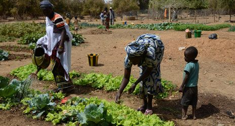 The Burkinabe Red Cross food security project, supported by the Spanish Red Cross, has helped women in Yagha province establish vegetable gardens. Sarah Oughton/IFRC