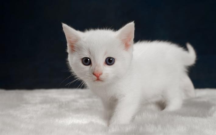 Télécharger fonds d'écran petit chaton blanc, mignon ...