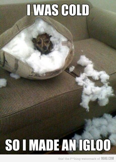 Is this what Brody was trying to do with our couch? Lol