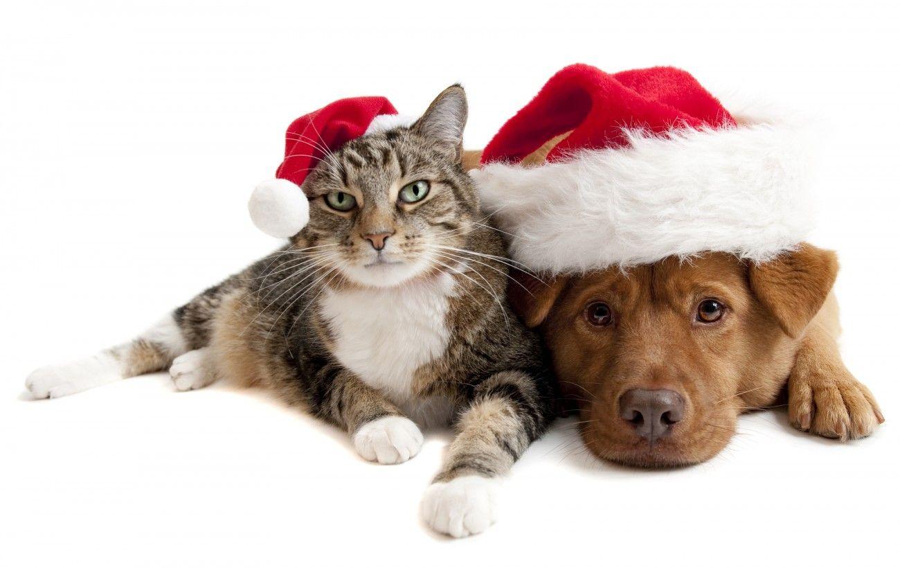 Dog and Cat Christmas 2014