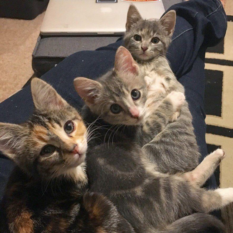 Kittens Found Under Porch Cuddle With Their Special Needs