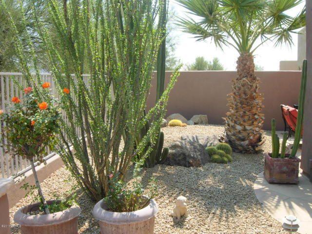 ocotillo in a pot | Small Backyard | Pinterest | Garden landscaping ...