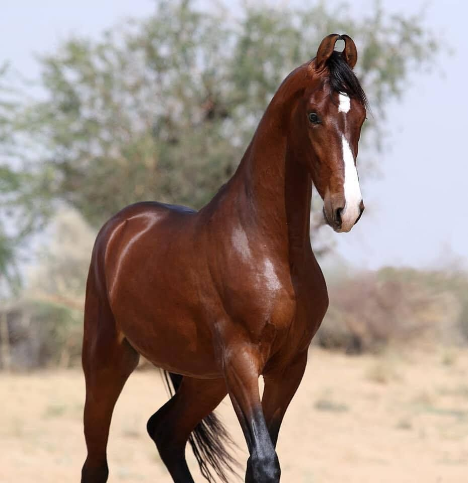 отличным картинки про лошадей редких пород имеет важное, можно
