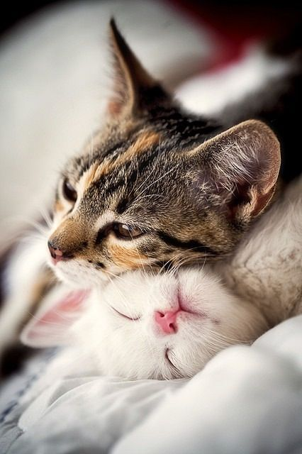 Kittens Animaux Photo Chat Chat Mignon