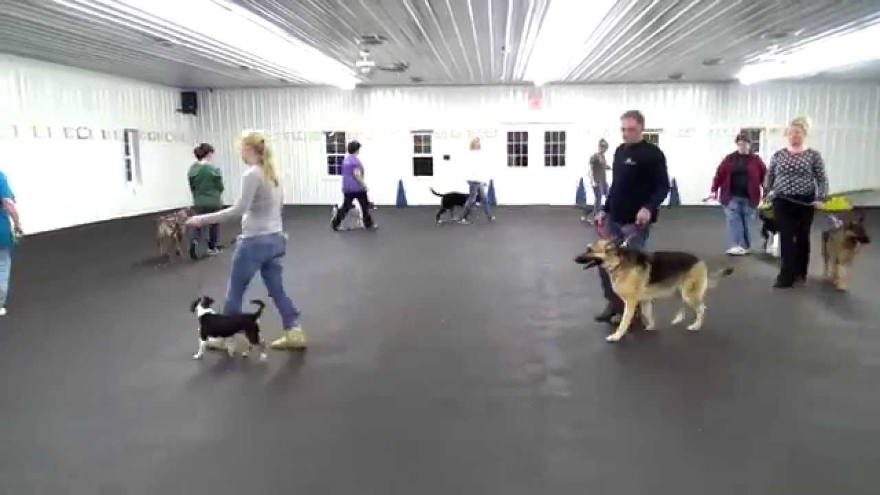 World Class Dog Kennels Dog Training Chicago Il Bambi S