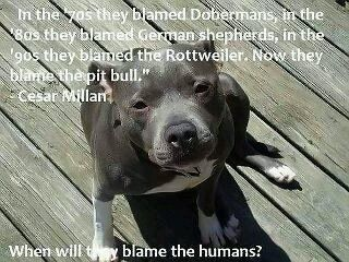 Dogs Are Not Born Vicious They Are Made That Way By Humans Ban